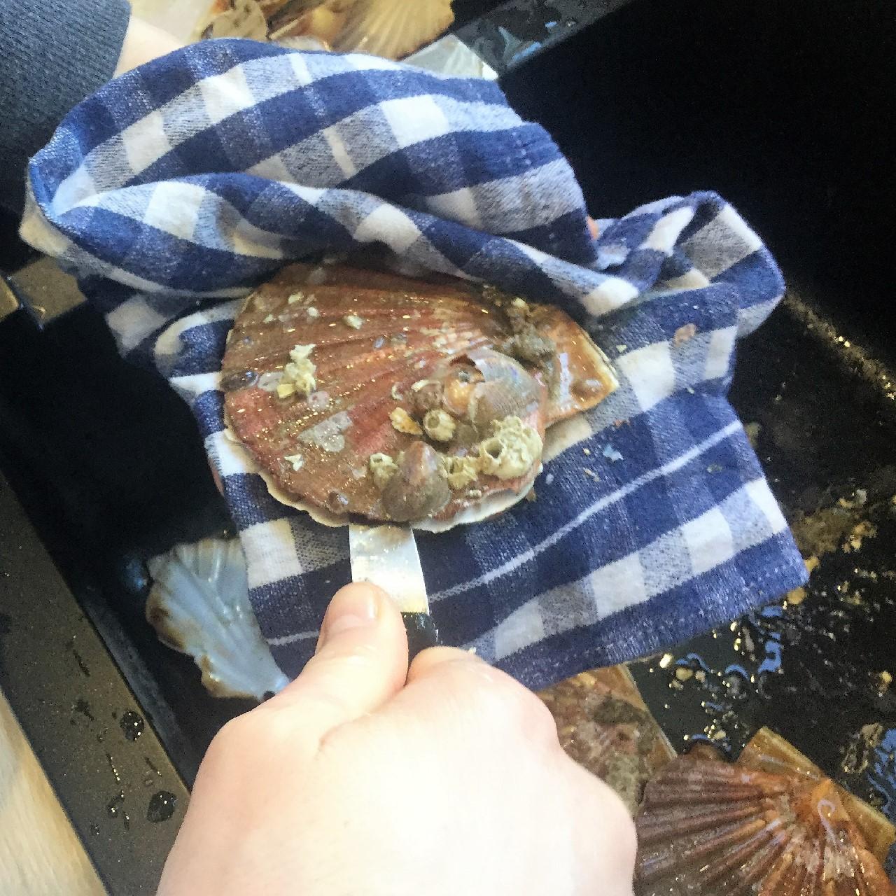Ouvrir une coquille saint jacques ta recette facile - Comment cuisiner les coquilles saint jacques ...